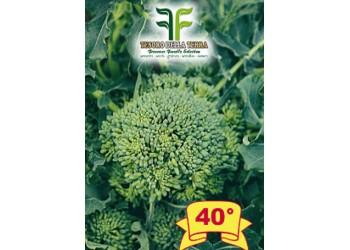 Cima di Rapa o Broccoletto 50° sel. Massafrese Cima Grande