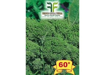 Cima di Rapa o Broccoletto 60° sel.Fasano Cima Grande