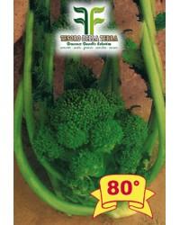 Cima di Rapa o Broccoletto 80° San Martino Grossissima