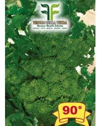 Cima di Rapa o Broccoletto 90° di Fasano Cima Grande