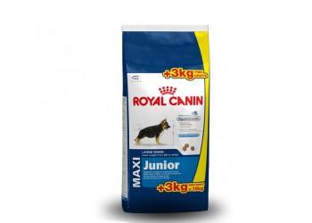 Royal Canin Maxi Junior kg 15 + kg 3 in omaggio