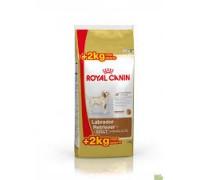 Royal Canin Labrador Retriever Adult da kg 14 ( kg 12 + kg 2 gratis € 3,32/kg )